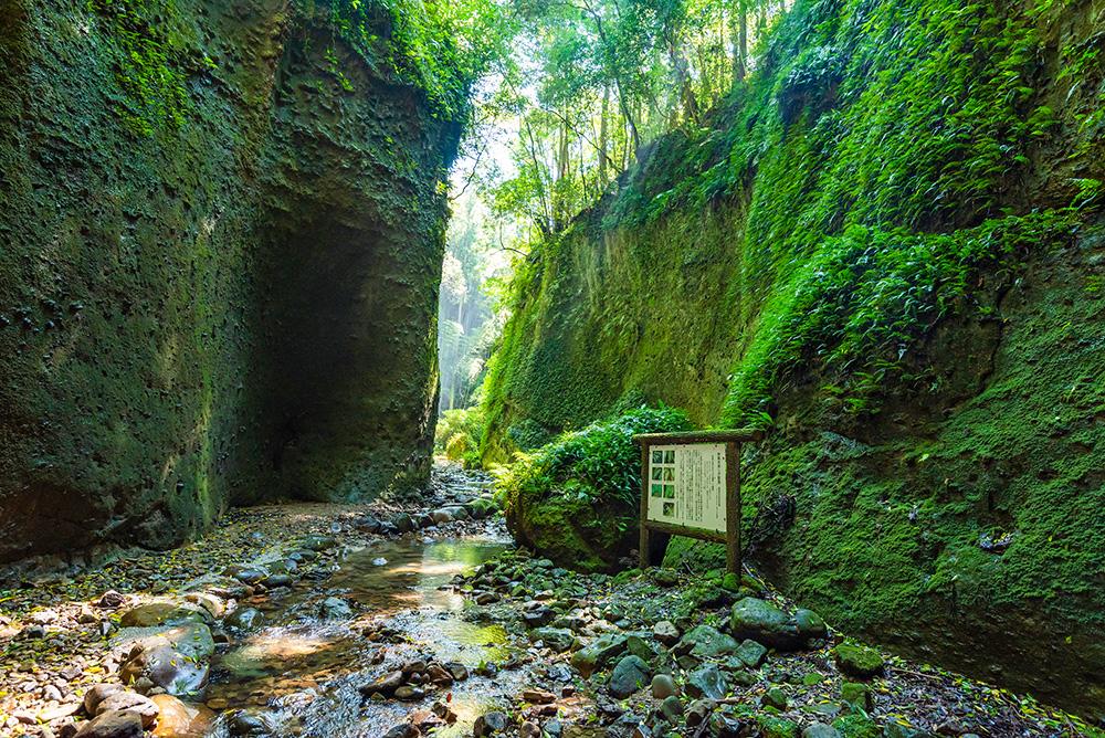写真:幻想的な渓谷の風景。切り立った斜面や大きな岩を鮮やかな苔が覆っている