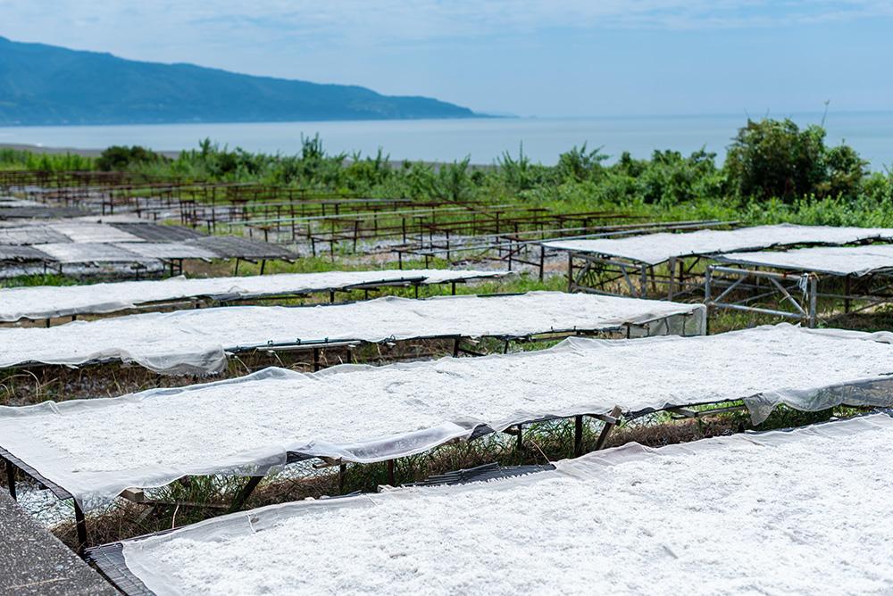 写真:ちりめんじゃこの天日干しの様子。海辺に並んだ平らな台の上に真っ白なちりめんじゃこが広げられている。